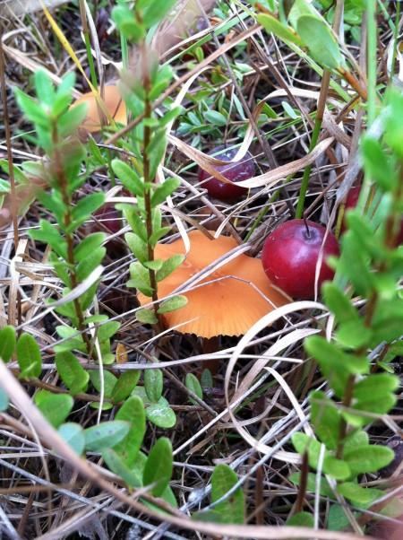 Cranberry & small mushroom from viviloveith.com